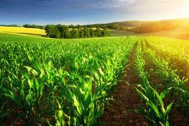 Nawozy dolistne dla zbóż