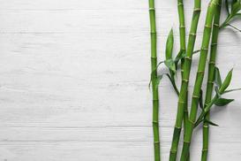 Sadzonki bambusa krok po kroku - rodzaje, ceny, opinie, porady