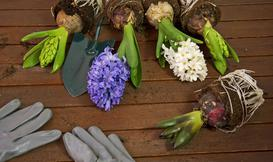 TOP 5 traw i cebul kwiatowych do Twojego ogrodu!