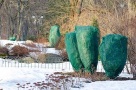 Okrywanie roślin na zimę. Wyjaśniamy, jak zabezpieczyć rośliny