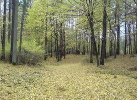 Nie było nas, był las, nie będzie nas, będzie las – ale czy na pewno?