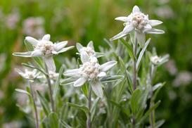 Jakie kwiaty są pod ochroną w Polsce? Oto lista gatunków
