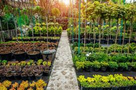 Szkółki drzewek i krzewów ozdobnych. Wyjaśniamy, gdzie kupić najlepsze rośliny