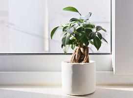 Rośliny doniczkowe, które warto mieć w domu - oto nasze 10 typów!