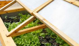 Budowa i zastosowanie inspektu ogrodowego. Praktyczny poradnik