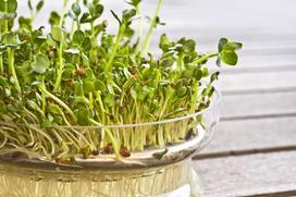 Jakie nasiona na kiełki wybrać? Oto 5 najlepszych propozycji