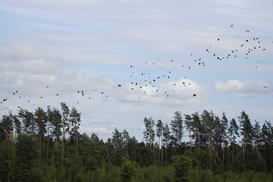Wiosenne powroty ptaków dużych i małych