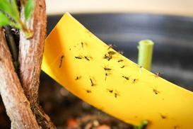 Pułapka na muchy - wykonanie, skuteczność, porady, opinie