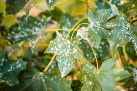 Jak zapobiegać chorobom grzybowym w naszym ogrodzie?
