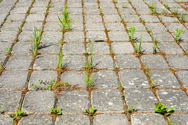Naturalny środek na chwasty w ogrodzie - Effect 24H