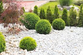 TOP 10 krzewów zimozielonych do ogrodu - opis, wymagania