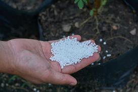 Jak stosować w ogrodzie siarczan potasu? Wyjaśniamy krok po kroku