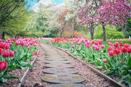 Pielęgnacja ogrodu - jak łatwo utrzymać w nim porządek?