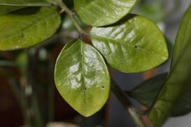 Jakie robaki można przynieść z kupionymi roślinami? Wyjaśniamy