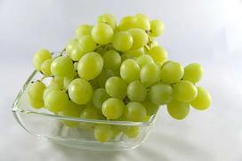 Winogrona bezpestkowe – opis, sadzonki, uprawa, porady
