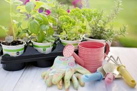 W jakie narzędzia do pracy w ogrodzie warto się wyposażyć?