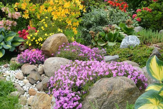 kwiaty na skalniak