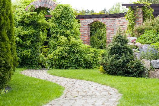rośliny zimozielone
