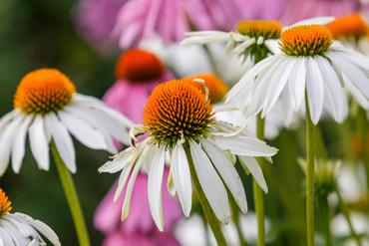 Kwiaty Wiosenne 30 Najpiekniejszych Kwiatow Ktore Zachwycaja Wiosna