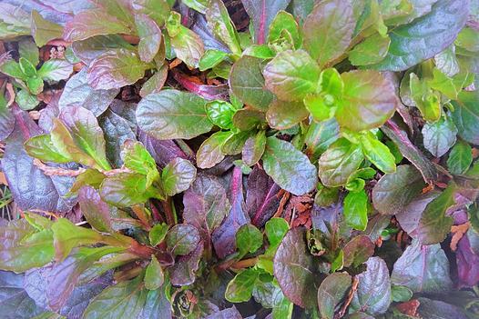 rośliny okrywowe