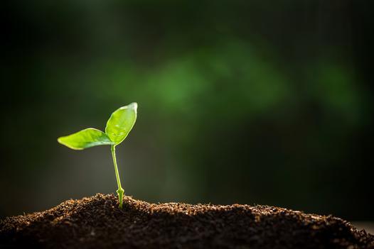 podłoże do roślin