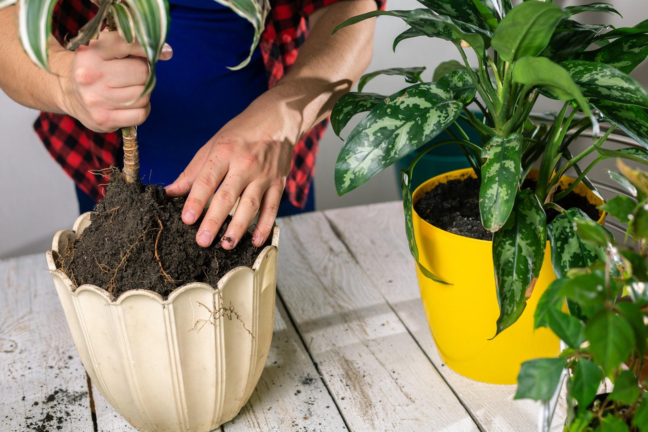 Przesadzanie Kwiatow Krok Po Kroku Terminy I Porady Praktyczne