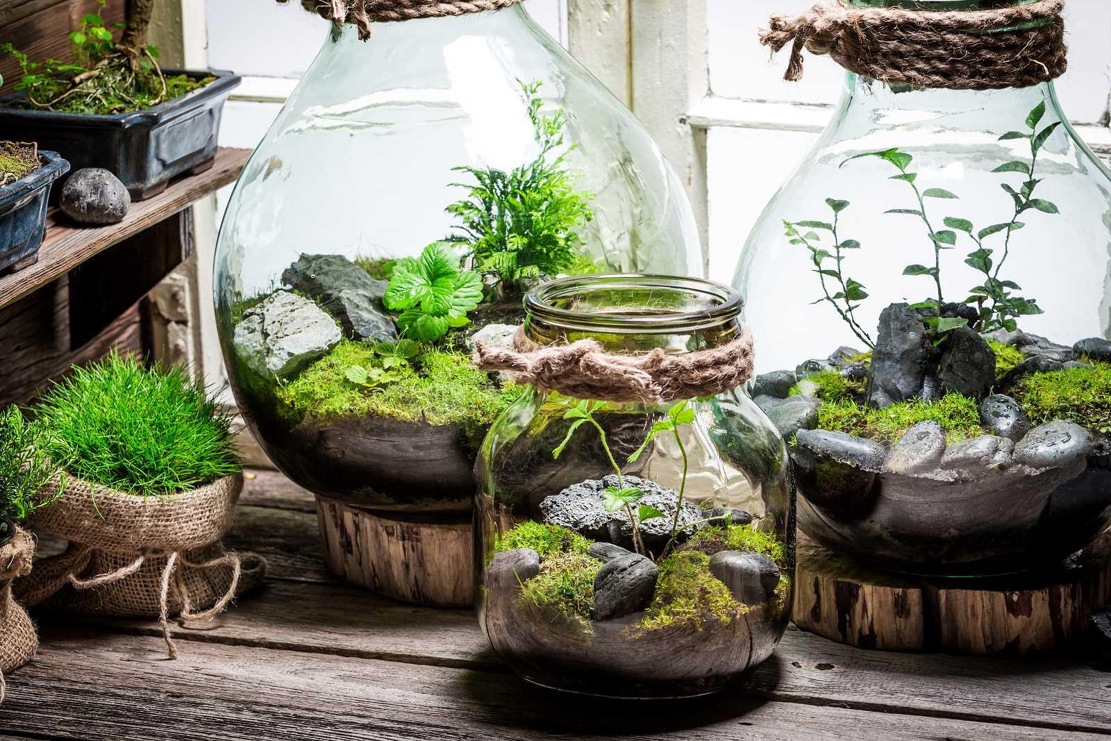 Top 3 Rośliny Do Lasu W Słoiku Zobacz Które Rośliny Sprawdzają Się Najlepiej