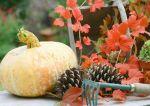 Warzywa ciepłolubne – kiedy je zbierać i jak zabezpieczać przed mrozem?