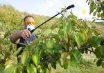 Jesienne opryski drzew owocowych – dlaczego warto je stosować?
