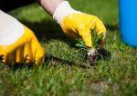 Pielęgnacja trawnika na wiosnę – 5 zabiegów, które musisz wykonać!
