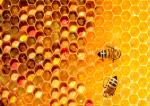 Jak chronić pszczoły?