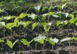 Kalendarz ogrodnika – kiedy siać kwiaty, warzywa i inne rośliny?