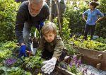 Kalendarz siewu warzyw – sprawdzamy terminy wysiewu w ogrodzie